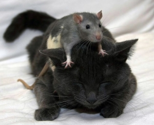 Il trouve une tête de souris dans ses haricots verts!